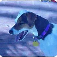 Adopt A Pet :: Nikka - Scottsdale, AZ