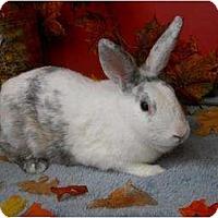Adopt A Pet :: Hildy - Roseville, CA