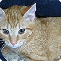 Adopt A Pet :: Tucker - Frederick, MD