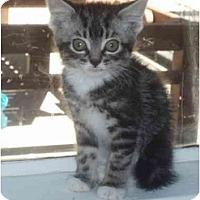 Adopt A Pet :: Wanda - Davis, CA