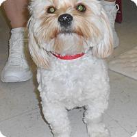 Adopt A Pet :: Harry - Lockhart, TX