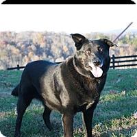Adopt A Pet :: Marley - Jacksboro, TN