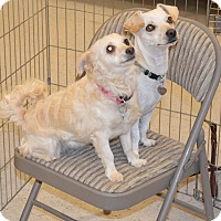Adopt A Pet :: Layla - Simi Valley, CA