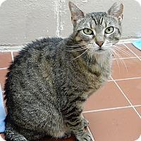 Adopt A Pet :: Roxanne - Long Beach, NY