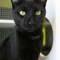 Adopt A Pet :: Sid - Los Angeles, CA