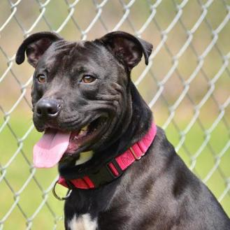 Terrier (Unknown Type, Small) Mix Dog for adoption in Brooksville, Florida - 10310056 BUCKEY