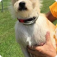 Adopt A Pet :: Tippy - Centerville, GA