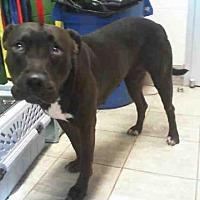 Adopt A Pet :: ARIEL - Grand Prairie, TX