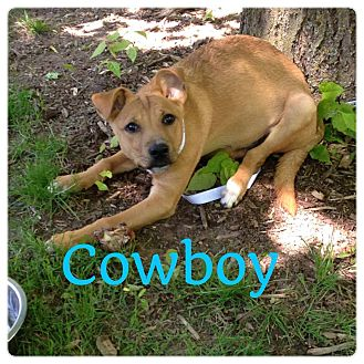 German Shepherd Dog Mix Puppy for adoption in Grand Ledge, Michigan - Cowboy
