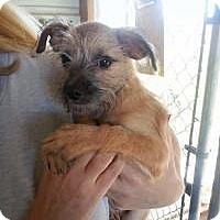 Adopt A Pet :: Lily - Marlton, NJ
