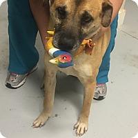 Adopt A Pet :: Maggie - Needs Surgery - New Canaan, CT