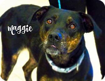 Labrador Retriever/Boxer Mix Dog for adoption in Defiance, Ohio - Maggie