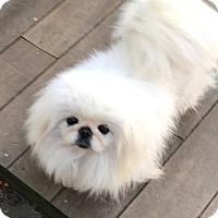Adopt A Pet :: Jackie - Portland, ME