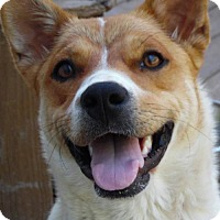 Adopt A Pet :: Hope - Taneytown, MD