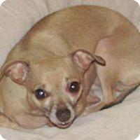 Adopt A Pet :: Sophie - Savannah, GA