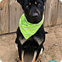 Adopt A Pet :: Dolly - Kimberton, PA