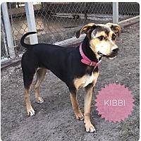 Adopt A Pet :: KIBBI - Ocala, FL