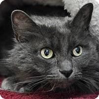 Adopt A Pet :: Esparanza - Long Beach, CA