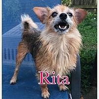 Adopt A Pet :: Rita - Va Beach, VA