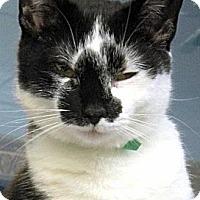 Adopt A Pet :: Halle - Huntington, NY