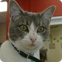 Adopt A Pet :: Bella - white settlment, TX