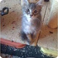 Adopt A Pet :: Yoyo - Mobile, AL