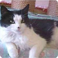 Adopt A Pet :: Gretchen - Lunenburg, MA