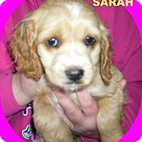 Adopt A Pet :: SARAH - W. Warwick, RI