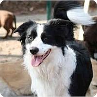 Adopt A Pet :: Tyler - Ft. Myers, FL