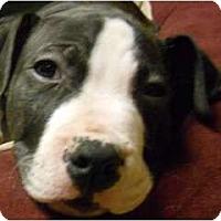 Adopt A Pet :: Junior - Dallas, PA