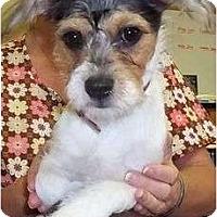 Adopt A Pet :: Trixie - Allentown, PA