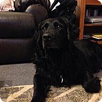 Adopt A Pet :: Cooper - Lewisville, IN