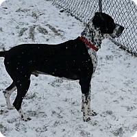 Adopt A Pet :: Oreo - York, PA