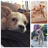 Adopt A Pet :: Jackson - st peters, MO