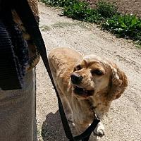 Adopt A Pet :: Mel - Templeton, CA