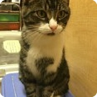 Adopt A Pet :: Jade - McHenry, IL