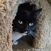 Adopt A Pet :: Theodore - bloomfield, NJ