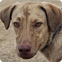 Husky/Plott Hound Mix Dog for adoption in Seattle, Washington - Jenny