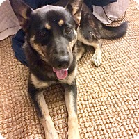 Adopt A Pet :: Lola - Courtesy Posting - New Canaan, CT