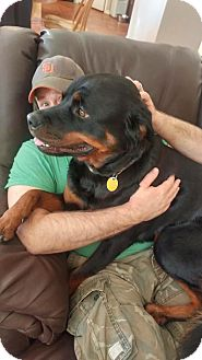 Rottweiler Dog for adoption in Las Vegas, Nevada - Ruby