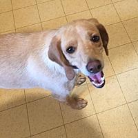 Adopt A Pet :: Sunshine - Jetersville, VA