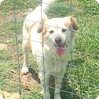 Adopt A Pet :: Karma - Madisonville, TX