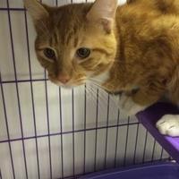 Adopt A Pet :: Jay - Huntingdon, PA