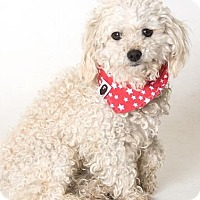 Adopt A Pet :: Tino - Canoga Park, CA