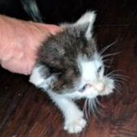 Adopt A Pet :: Salter - Santa Fe, TX