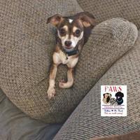 Adopt A Pet :: Cookie - Killeen, TX