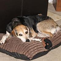 Adopt A Pet :: Katie - Jacksonville, FL
