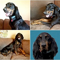 Adopt A Pet :: HOWIE - Findlay, OH