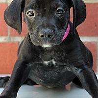 Adopt A Pet :: Sara - Waldorf, MD