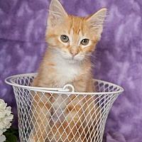 Adopt A Pet :: Canoli - Muskegon, MI